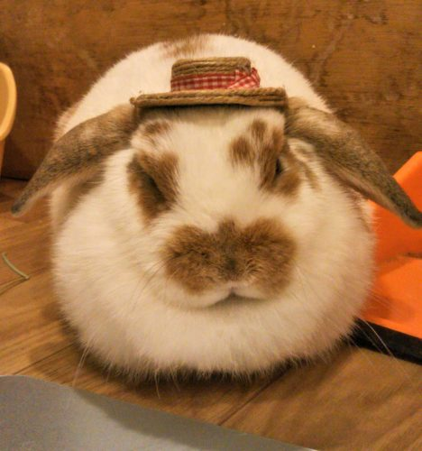 うるるのお帽子