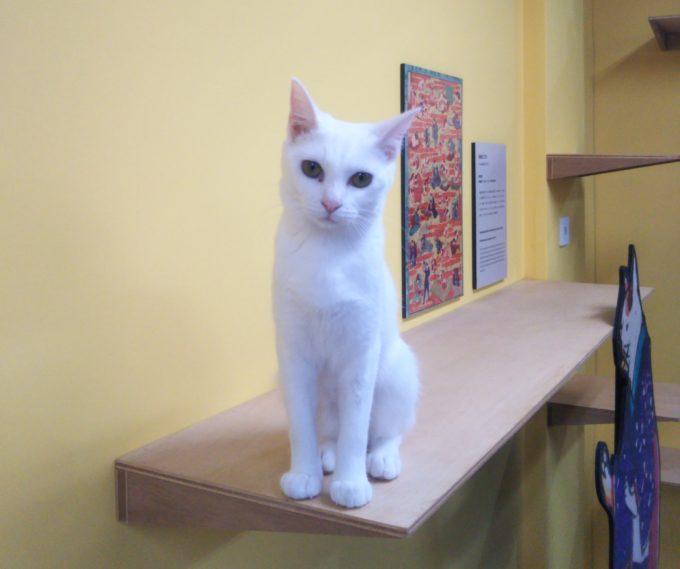 江戸ねこ茶屋美形な白猫
