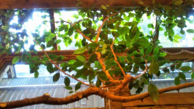 つぶつぶカフェ店内には緑もディスプレイされていて自然の中にいるみたい