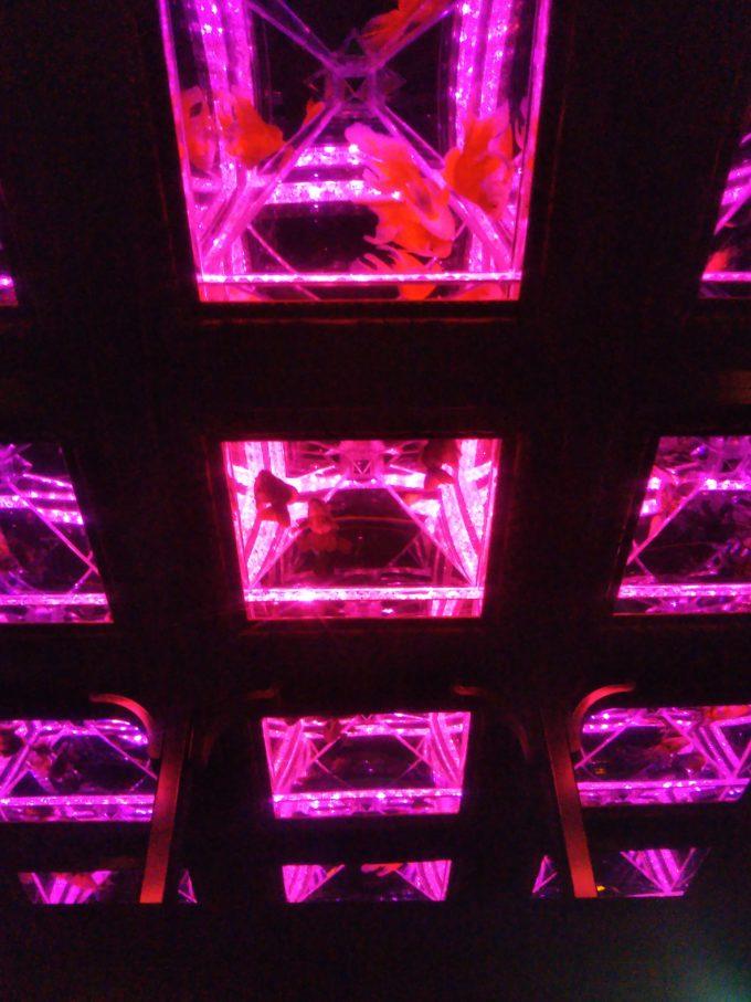 アートアクアリウム日本橋 光の中から浮かんで見える金魚