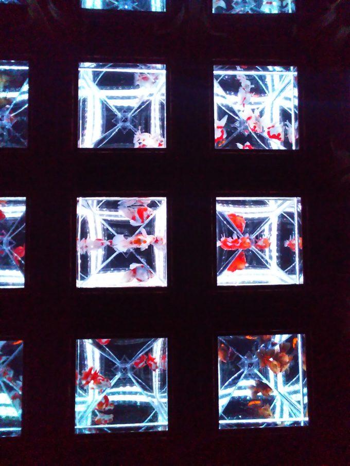 アートアクアリウム日本橋 金魚が万華鏡のように見える透明の光