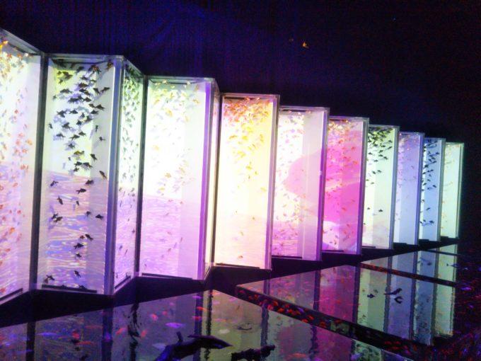 アートアクアリウム 屏風の中に金魚が泳います。