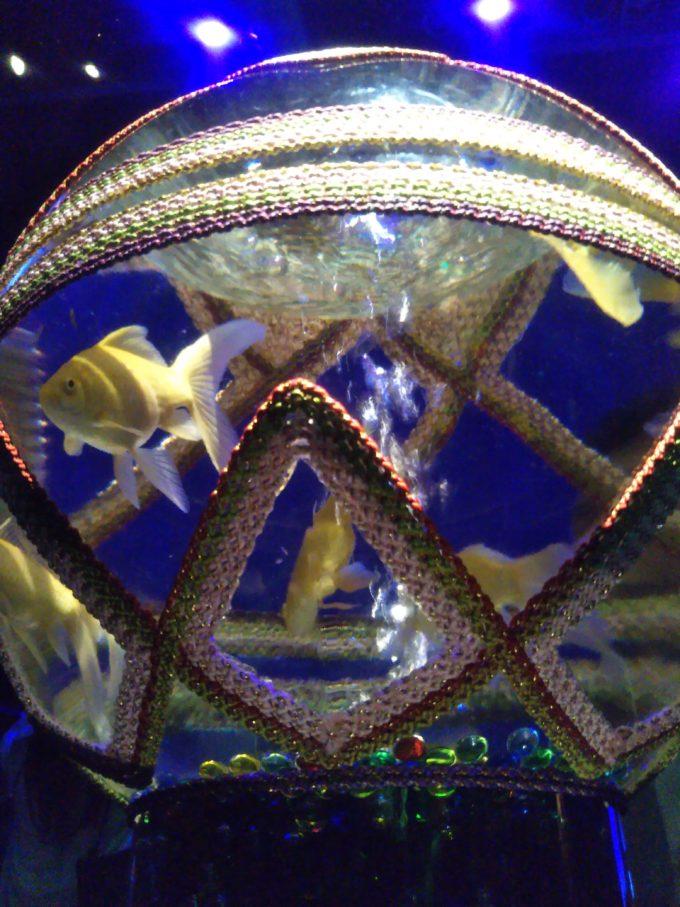アートアクアリウム日本橋 手毬の水槽を下から見た様子