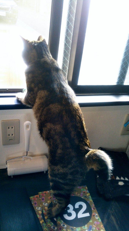 にゃんこが2本足で立ち上がって外を眺めている姿がカワイイ!