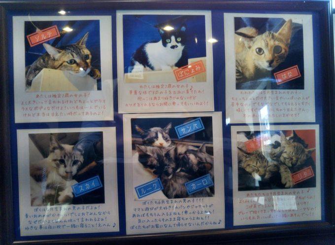 宿木カフェにいる保護猫たちの名前・年齢が書かれたボード